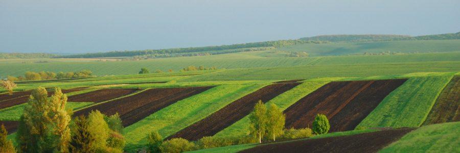 Особенности покупки государственной земли